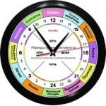 Часы активности (работы) органов человека